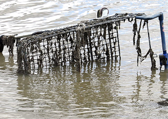 Shopping trolley dumped in the River Thames at Deptford